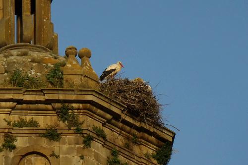 ふと教会の塔を見ると、そこにはコウノトリが