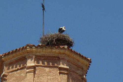 塔の上にはコウノトリが