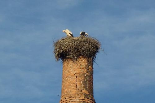 その先っぽにもコウノトリの巣が