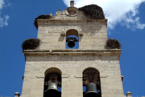 その鐘楼には、なんと四つも巣が作られていた