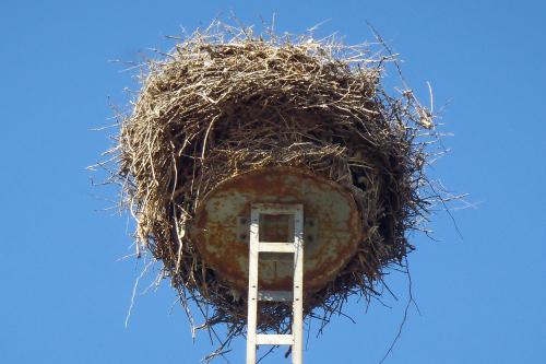 小さな円盤の上に、器用に巣が作られている