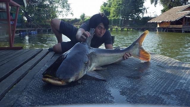 今回釣れた最大魚。大きな個体は背中が盛り上がり、ヒレが黄色っぽくなるものが多いようだ。