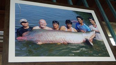 過去にこの釣り堀で釣りあげられたピラルクーの写真が飾られていた。