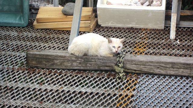 味噌汁屋さんに、居着いていたネコ。全然、触らせてくれませんでした。いいもの食べさせてもらってるんだろうなあ。