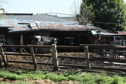 綾瀬市の住宅街には牧場がある
