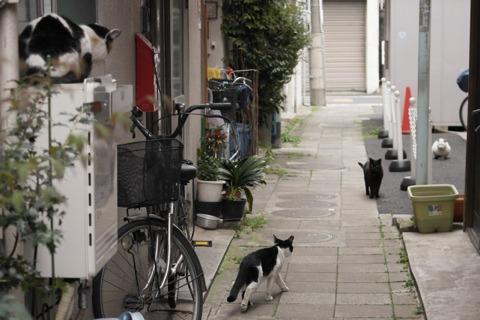 狭い道にはネコがいる。1ドットネコ。