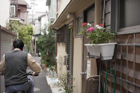 玄関の花。「順番に咲いてきれいだよ」とのこと。