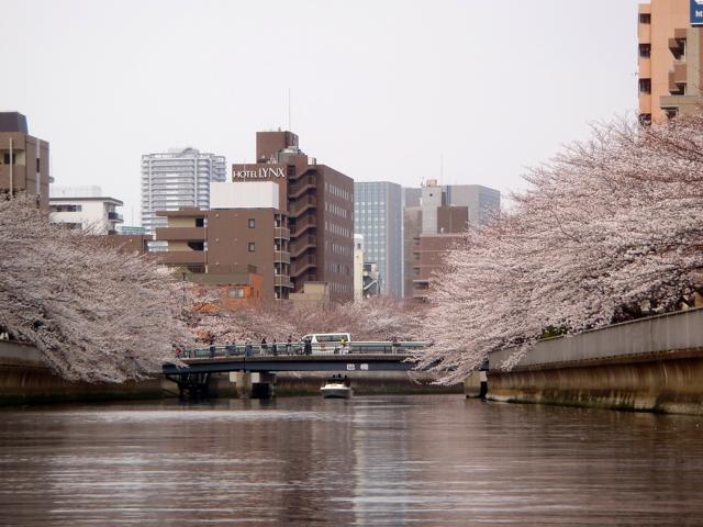 そして、両岸の桜を一度に楽しめる。