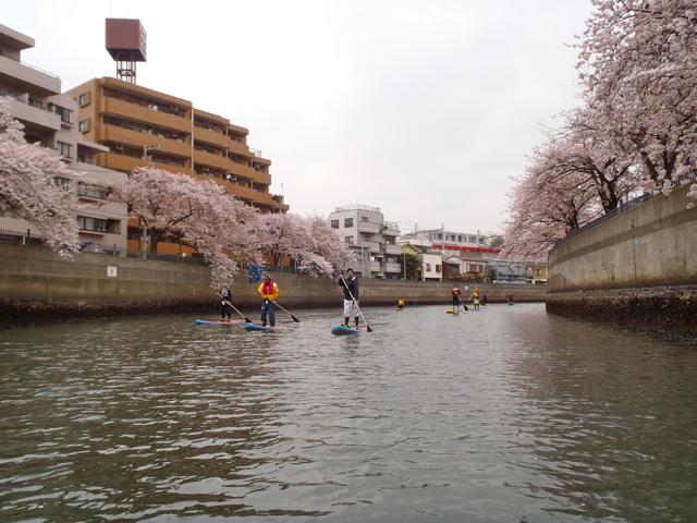京急の脇を流れる大岡川は、上流までずっと桜並木がつづく。遊歩道には露店も並んで賑やか。川は広々。