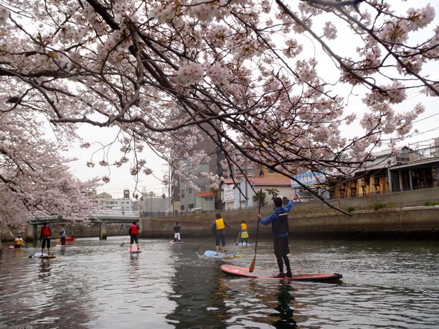 桜も近い。