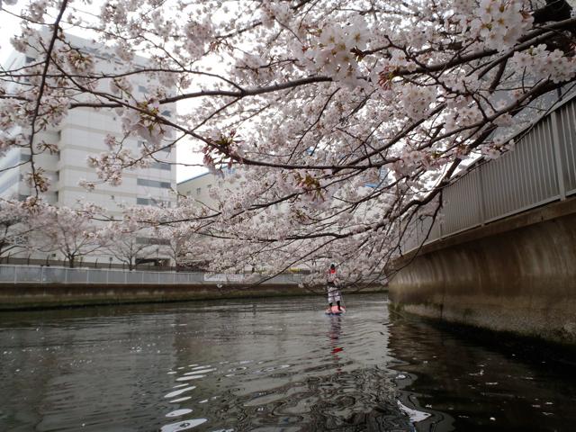 枝がはりだしてできる、水上の桜のトンネルの下を進む。