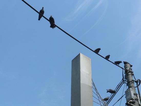 店の周囲の電線にはハトがびっしり
