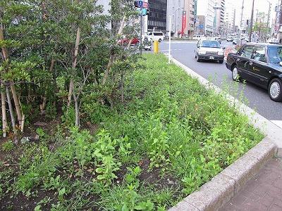 何気ない植え込みも、貴重な「緑地」。