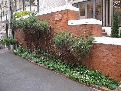 こういう個人が管理している花壇や植え込みは気軽にのぞきこめないよね。