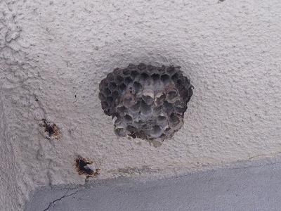 おおっ、ハチの巣!!もぬけの殻だけど。