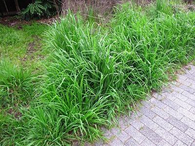 いい草むら見つけた!が…