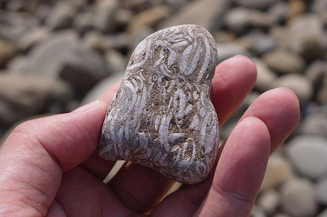 生物っぽいぐちゃぐちゃしたものがびっしり入ってる石。