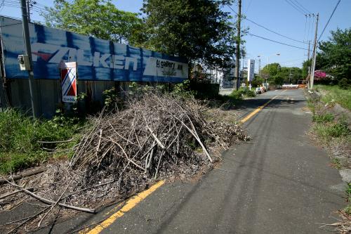 捨てられたものだろうか、木の枝が積まれていた