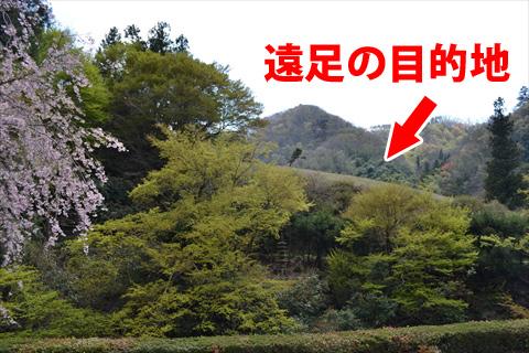 沢を挟んで向こう側にある原っぱ(櫻井家の敷地)が遠足の目的地だったそうだ