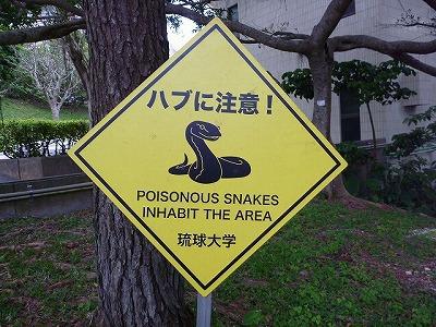 本島南部の琉球大学構内にはハブ注意の看板が。緊張感のあるキャンパスライフを送れることだろう。