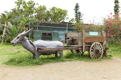 昭和40年頃の水牛車の復元。ロバっぽいけど水牛