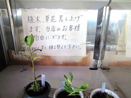 「植木、草花、差し上げます」!