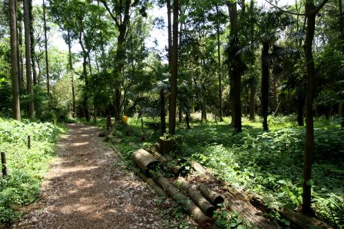 間伐の手が入れられ、下草も刈られ、歩道まで整備されていた