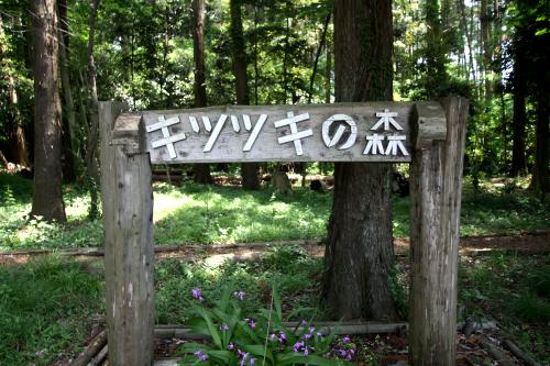 「キツツキの森」と、親しみやすい名前も付けられている