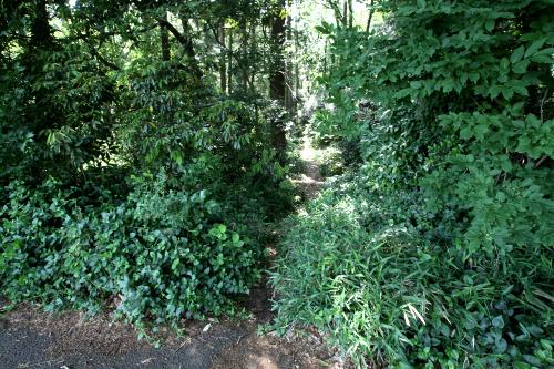 森の内部へ、ちょっとした道が通じていた