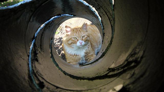 猫もジェームズ・ボンド