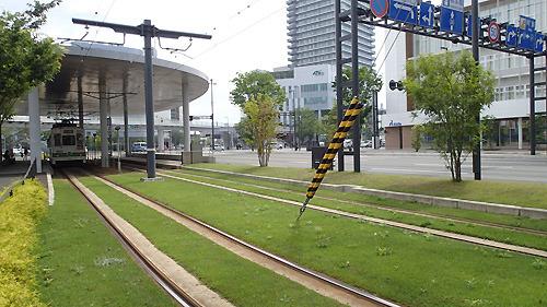 街のいたるところに芝生が。