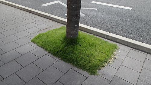 こういうちょっとした土地にも芝生。