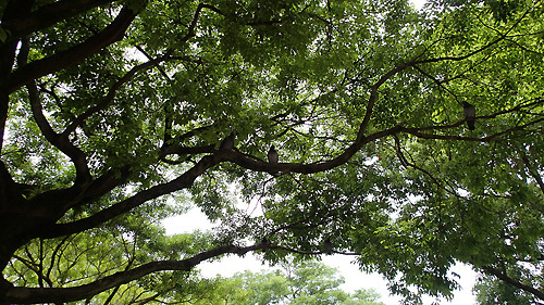 木の上にも見ているやつらがいるな、と2歩くらい離れて写真を撮りに行ったのがいけなかった。