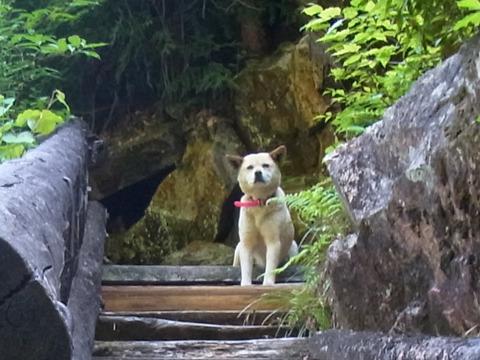 遠い目をして仙人のように佇む犬。ここは桃源郷か夢の中?!