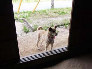 家の中に入るのを我慢するマリちゃん。偉い!