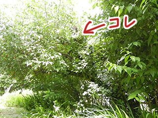 登った記念に写真を撮ってもらったが、木がうっそうとしすぎてて全然見えない。(そして体重で木が傾きすぎ……)