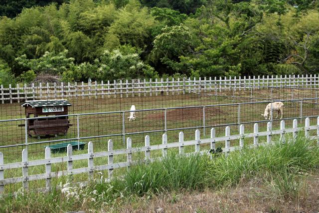 目の前の草原には草を食むヤギの姿が。ホントにいた!
