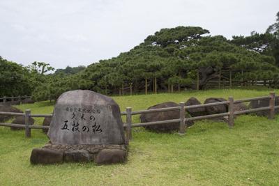 琉球二大松のひとつです