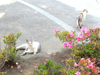 その日、新大久保に、早朝、猫が30匹くらい出没する公園を発見したのですが、またの機会に紹介します…。