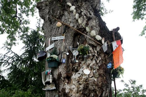 木を巡礼グッツで飾る人もいる