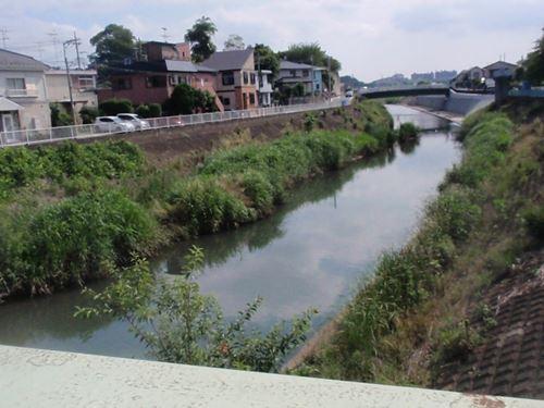 一級河川・早渕川。水はわりと緑っぽい色です。