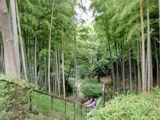 緑豊かな公園もありました。