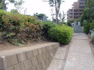 墓地があって遺跡っぽい雰囲気(?)