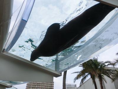 水族館名物「空飛ぶアシカ」