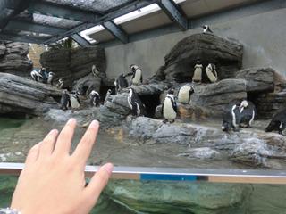 かわいいけど少し生臭いペンギン