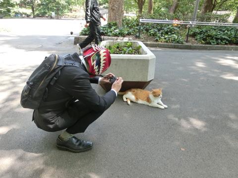人に慣れた猫にカメラを向ける