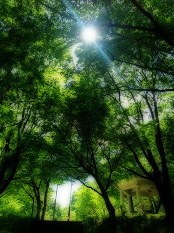 メルヘンの森に木漏れ日が差し込む