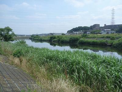 横浜といえば港町。というイメージだったが、立派な川もあるのだ。