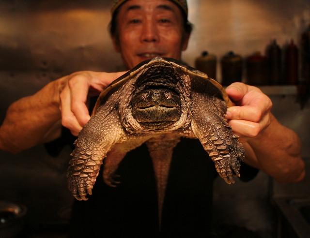 カミツキガメは中北米の一部では食用に珍重される。だが日本の料理人に調理される例はさすがに初めてかもしれない。