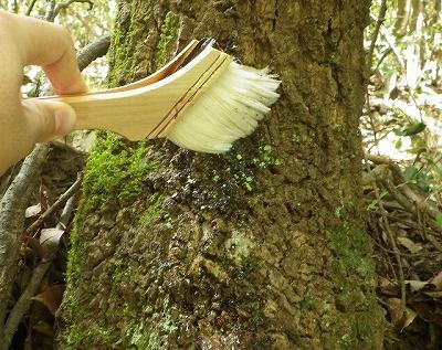はけで木の幹に塗る。が…。